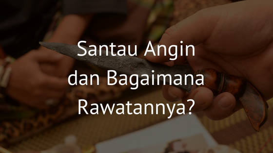 santau angin